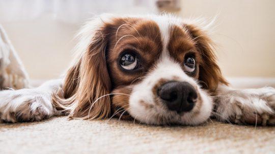Een puppy verzorgen