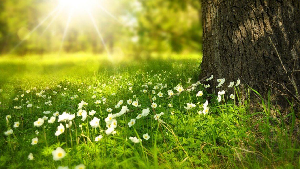 Veilig en gezond de natuur in